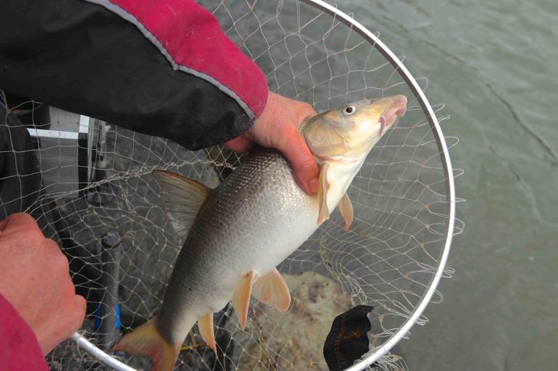 Fragen an Angler