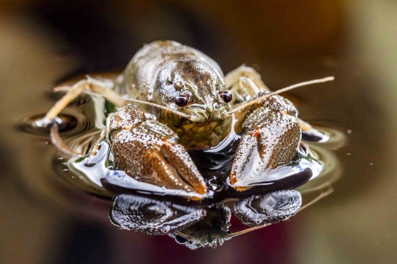 Krebse fangen