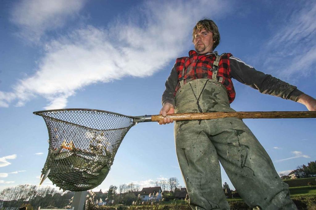 Wirtschaftsfaktor Angeln: Besatzfisch